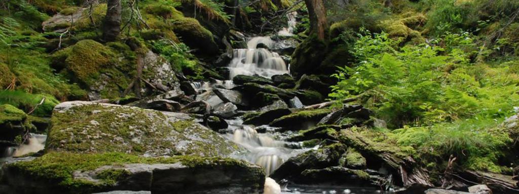 back-skog-986x3702